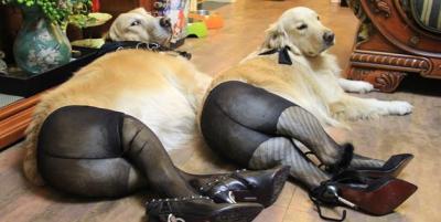 dogs_pantyhose