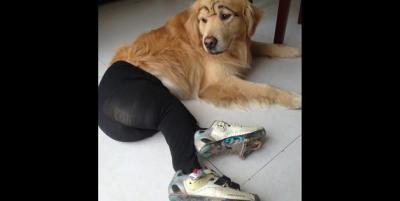 dogs_pantyhose2